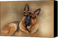 Alsatian Canvas Prints - Those Eyes Canvas Print by Sandy Keeton