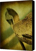 Tropical Bird Art Canvas Prints - Thoughtful Pelican Canvas Print by Susanne Van Hulst