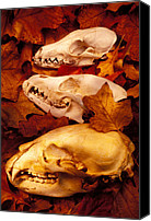 Animal Glass Art Canvas Prints - Three Animal Skulls Canvas Print by Garry Gay