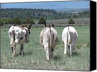 Melody Perez Canvas Prints - Three asses Canvas Print by Melody Perez