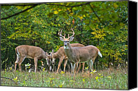 Mammals Canvas Prints - Three Bucks_0054_4463 Canvas Print by Michael Peychich