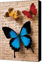 Notes Canvas Prints - Three butterflies Canvas Print by Garry Gay