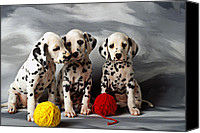 Dog Canvas Prints - Three Dalmatian puppies  Canvas Print by Garry Gay