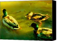 Pond Canvas Prints - Three Ducks on Golden Pond Canvas Print by Amy Vangsgard