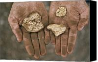 Gold Metal Canvas Prints - Three gold nuggets in a Canvas Print by National Geographic