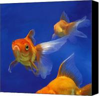 Goldfish Canvas Prints - Three Goldfish Canvas Print by Simon Sturge