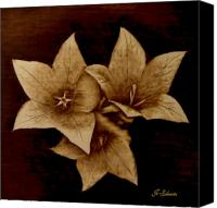 Flowers Pyrography Canvas Prints - Three Canvas Print by Jo Schwartz
