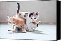 Domestic Animals Photography Canvas Prints - Three Kittens Canvas Print by Photos by Andy Le