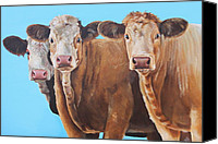 Cow Canvas Prints - Three Moosketeers Canvas Print by Laura Carey