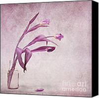 Pinkish Canvas Prints - Three Of Us Canvas Print by Priska Wettstein