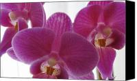 Purple Floral Canvas Prints - Three Orchids Canvas Print by M P Mahoney