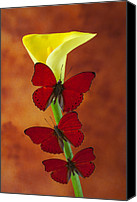 Red Glass Art Canvas Prints - Three red butterflies on calla lily Canvas Print by Garry Gay