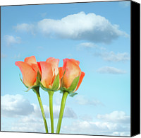 Orange Flower Photo Canvas Prints - Three Roses Canvas Print by Peter Chadwick LRPS