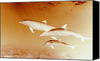 Dolphins Digital Art Canvas Prints - Three Canvas Print by Steve Thorpe