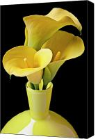 Decorate Canvas Prints - Three yellow calla lilies Canvas Print by Garry Gay
