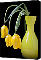 Vases Canvas Prints - Three yellow tulips Canvas Print by Garry Gay