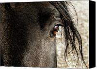 Hovind Canvas Prints - Through the Eye of a Stallion Canvas Print by Scott Hovind