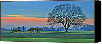 Amish Canvas Prints - Through The Fields Canvas Print by Scott Mahon