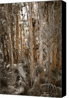 Treescape Canvas Prints - Through the Forest Trees Canvas Print by Carolyn Marshall
