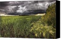 Thunderclouds Canvas Prints - Thunder Clouds Over Field Of Wheat Canvas Print by Dan Jurak