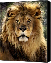Lion Canvas Prints - Thy Kingdom Come Canvas Print by Linda Mishler