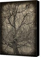 Jerry Cordeiro Prints Canvas Prints - Tickle of Branches  Canvas Print by Jerry Cordeiro