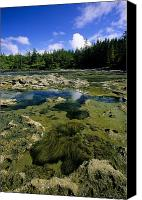 Botanical Beach Canvas Prints - Tide Pools, Botanical Beach, Vancouver Canvas Print by John Sylvester