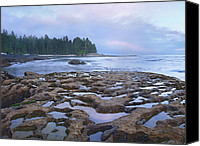 Botanical Beach Canvas Prints - Tide Pools Exposed At Low Tide Canvas Print by Tim Fitzharris