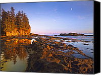 Botanical Beach Canvas Prints - Tidepools Exposed At Low Tide Botanical Canvas Print by Tim Fitzharris