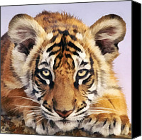 Bigcat Canvas Prints - Tiger Cub Canvas Print by Walter Colvin