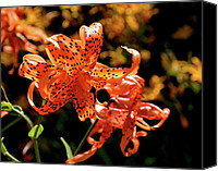 Lillies Canvas Prints - Tiger Lilies Canvas Print by Rona Black