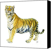 Natalie Berman Canvas Prints - Tiger Canvas Print by Natalie Berman