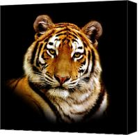 Tiger Canvas Prints - Tiger Canvas Print by Photodream Art