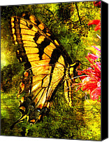 Walker Digital Art Canvas Prints - Tiger Swallowtail Butterfly Happily Feeds Canvas Print by J Larry Walker