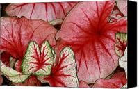 Caladium Photo Canvas Prints - Time Remembered Canvas Print by Paul Slebodnick