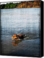 Water Retrieve Canvas Prints - Time to Fetch Canvas Print by Joan  Minchak