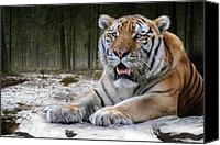 Tampa Digital Art Canvas Prints - Tj  Canvas Print by Big Cat Rescue