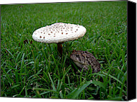 Mushroom Canvas Prints - TOAD n STOOL Canvas Print by Skip Willits