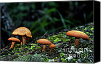 Toadstools Canvas Prints - Toadstool Village Canvas Print by Kaye Menner