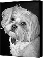Pet Portrait Canvas Prints - Toby Canvas Print by Enzie Shahmiri