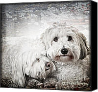 Puppies Canvas Prints - Together Canvas Print by Elena Elisseeva