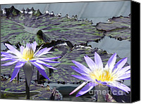 Violet Prints Photo Canvas Prints - Together is Beauty Canvas Print by Chrisann Ellis