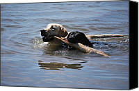 Water Retrieve Canvas Prints - Together We Fetch Canvas Print by Kathy Sampson