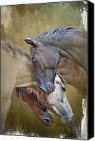 Filly Canvas Prints - Togetherness Canvas Print by Ryan Courson