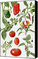 Huckleberry Canvas Prints - Tomatoes and related vegetables Canvas Print by Elizabeth Rice 