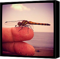 Dragonfly Canvas Prints - Tombo Dragonfly On Finger Canvas Print by Patric Spohn