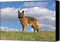 Alsatian Canvas Prints - Top of the Hill Canvas Print by Sandy Keeton