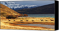Camelid Canvas Prints - Torres del Paine National Park Canvas Print by Mircea Costina Photography