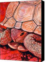 Kelso Canvas Prints - Tortoise Canvas Print by Bonnie Kelso