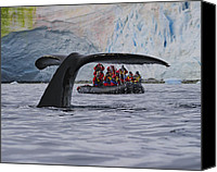 Whale Canvas Prints - Total Fluke Canvas Print by Tony Beck